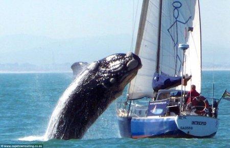 Кит выпрыгнул из воды прямо на яхту!