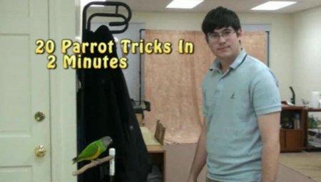 20 трюков с попугаем за 2 минуты