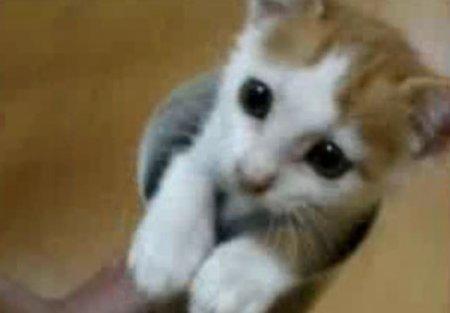 Фокус с котёнком