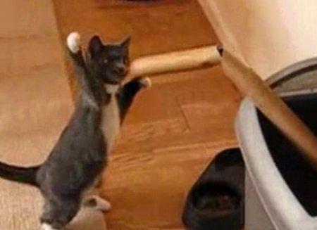 Котёнок-боксёр