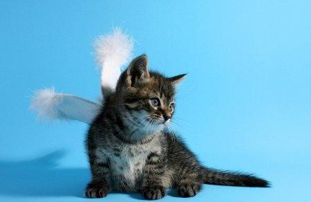 Котёнок-ангелок