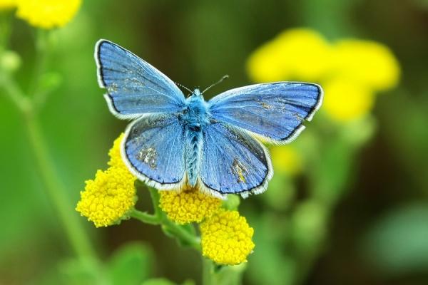 что мечты у женщин похожи как бабочки, просто разных видов и расцветок.