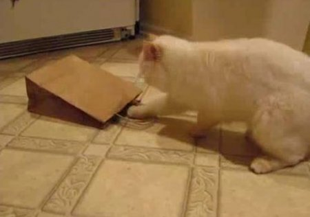 ТРОГАТельная кошка