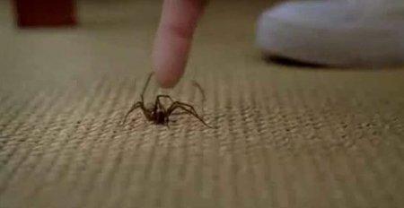 Как паук завалил человека