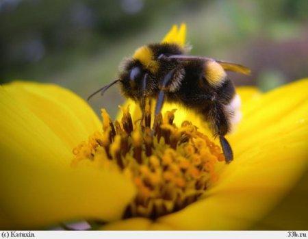 Факты про пчёл