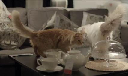 Кошки в рекламе IKEA
