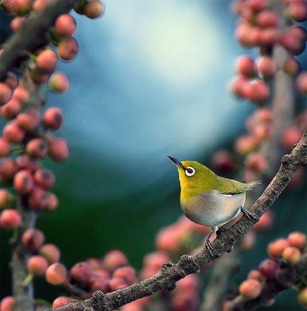 Птичка-невеличка и ягодки
