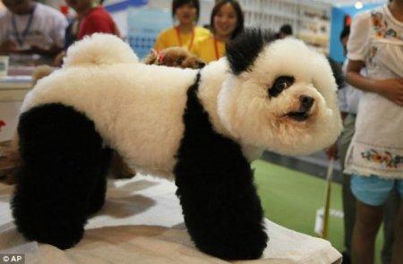 Пудель или панда?