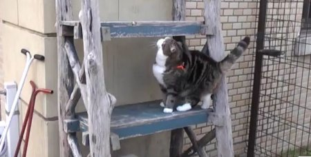 Кот-альпинист