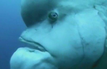 Рыба-шрек