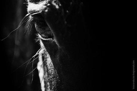 Глаз боевого коня