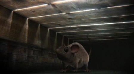 Невероятные приключения мышки