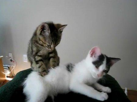 Котёнок-массажист