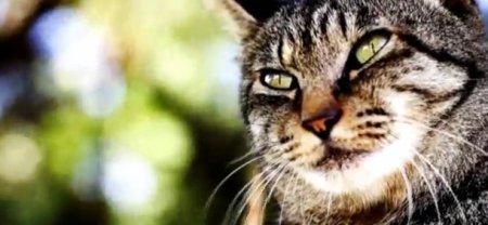 Жизнь кота Нора