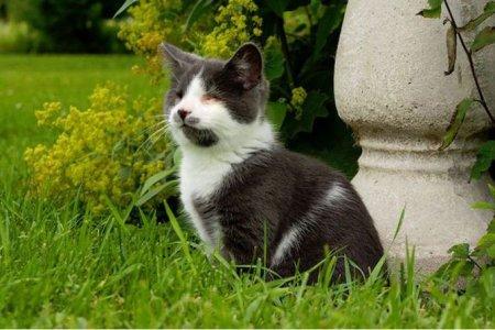 Необычная судьба котёнка Джека