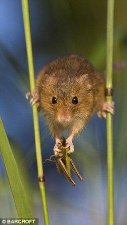Тайная жизнь мышей