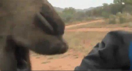 Верблюд-людоед