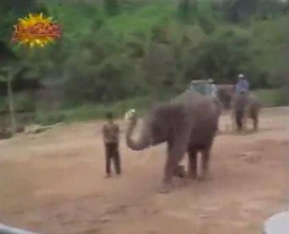 Слон-акробат