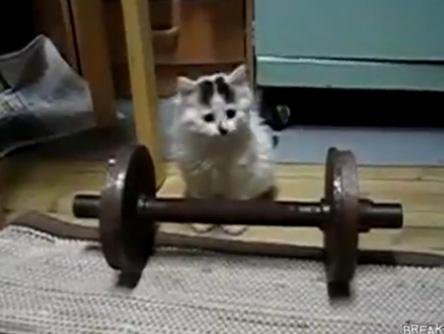 Котёнок и гантеля