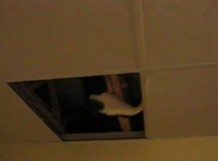 Кот-шпион