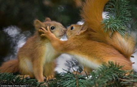 Дай я тебя поцелую!