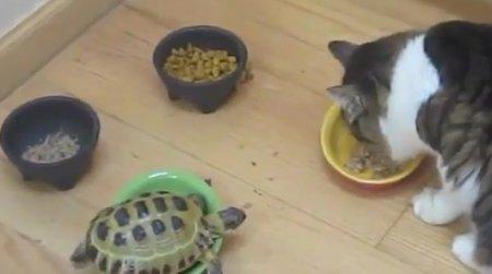 Черепаха-ниндзя
