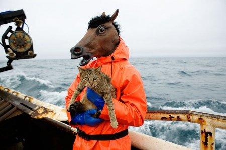 Кот с конём