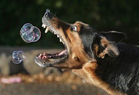 Пузырикиии!