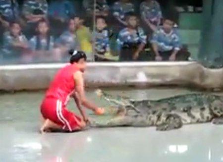 Опасный номер с крокодилом