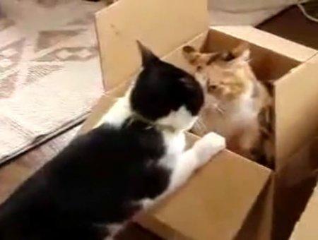 Не поделили коробку