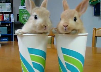 Два крольца из ларца