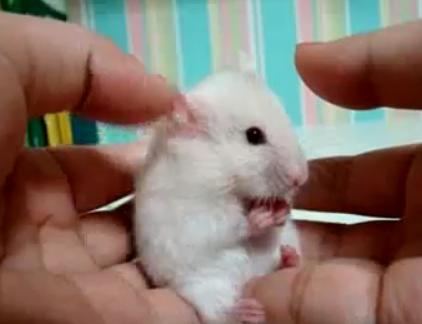 Удивлённый мышонок
