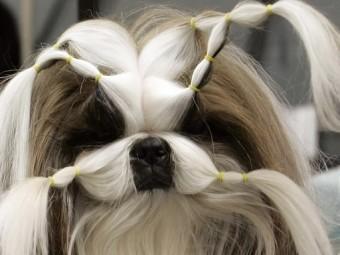 В Англии освятили щенка