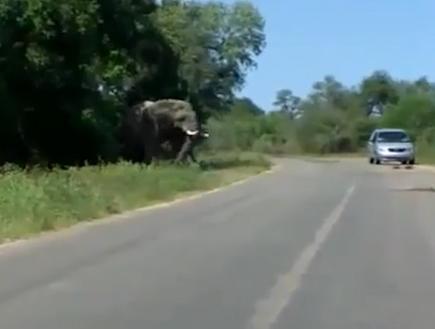Слон в засаде