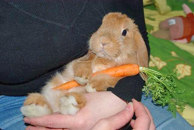 http://www.zooblog.ru/uploads/posts/2010-11/1291118105_203465.jpg