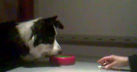 Собака играет в кости