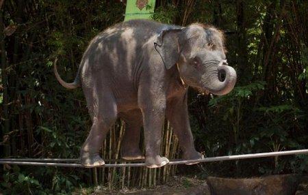 Слон-канатоходец (Бангкок)