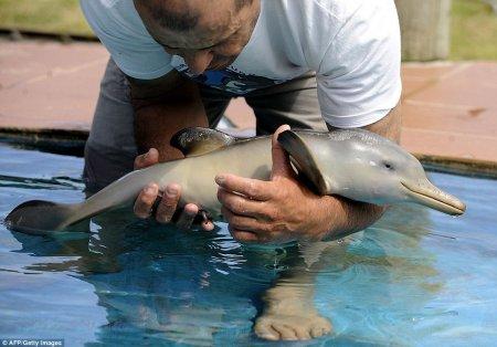 Спасение дельфинёнка