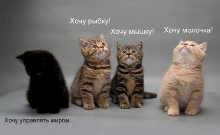 Котята по имени Хочу!