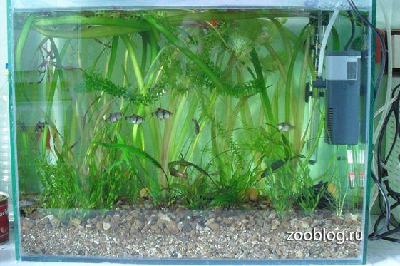 Каркасный аквариум своими руками