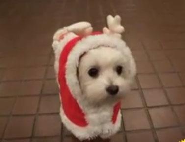 Милая новогодняя собачка