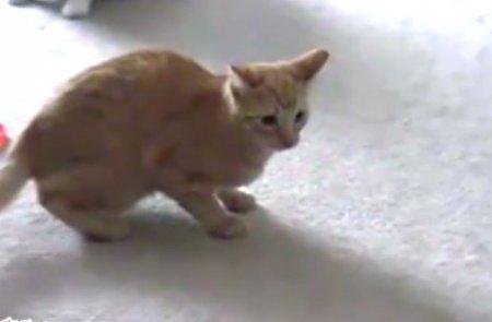 Высокоскоростной кот