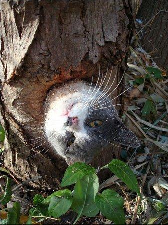 Как кот застрял в дупле