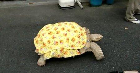 Черепаха-модница