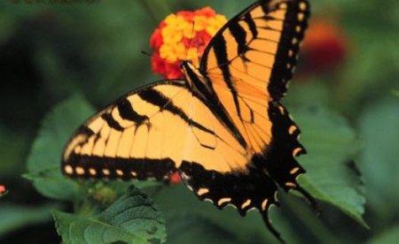 В Доминикане открылся парк бабочек Papillon Garden