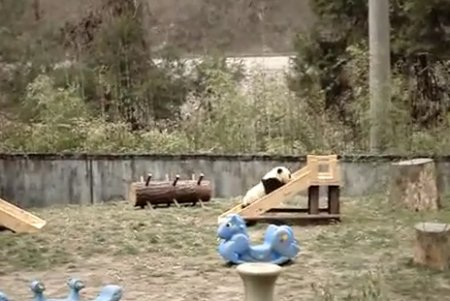 Панда и горки