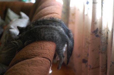 Вешалка для котят