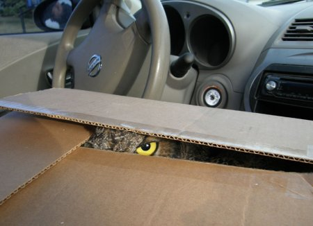 Я наблюдаю за тобой!