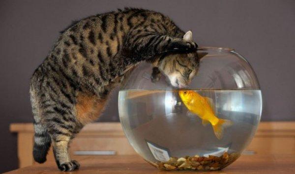 http://www.zooblog.ru/uploads/posts/2011-01/1294261649_1-1.jpg