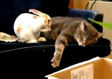 Кот и кролик после Нового года